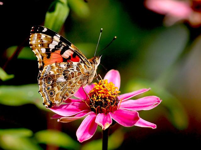 OMD EM1 10.24.2021 butterfly 2