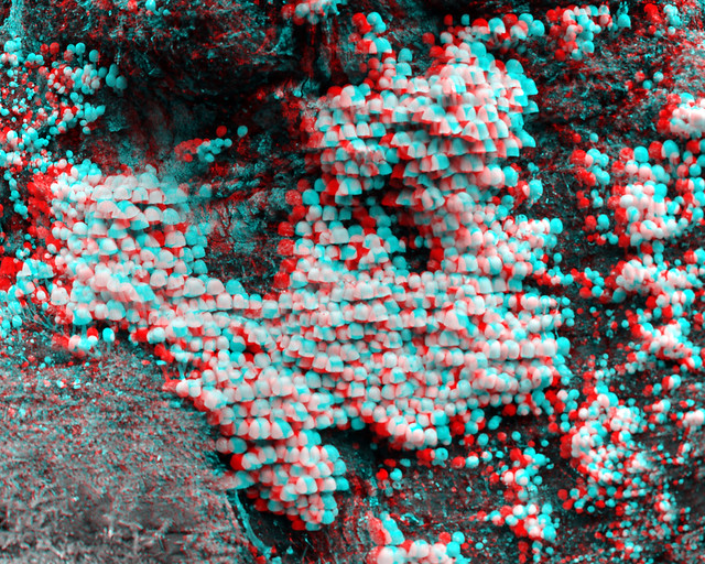 tree with mushrooms  3D anaglyph B&W