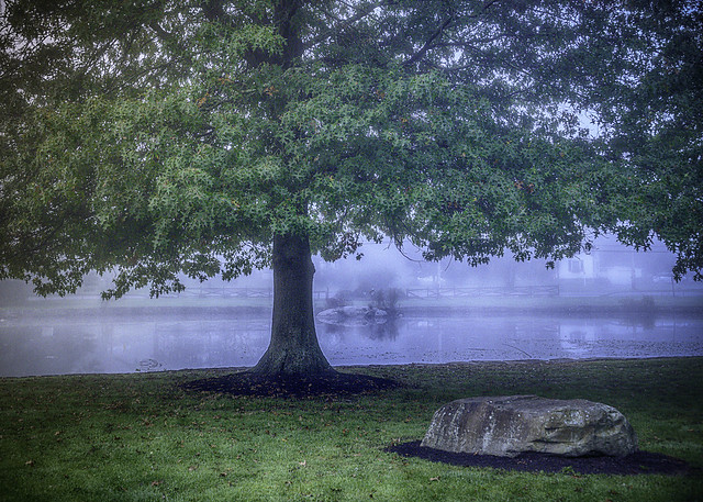 Tree by pond with fog