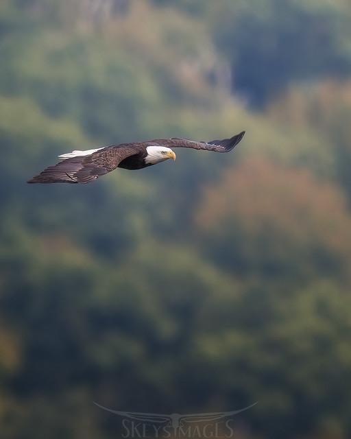Eagle21fallaCS