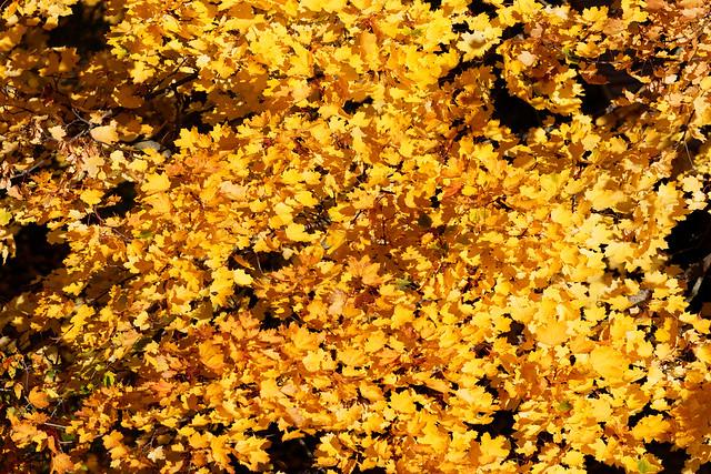 Finest October gold