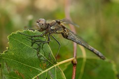 Rescued dragon fly