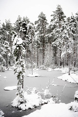 Winter 2021.jpg
