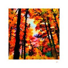 Autumn in full color.