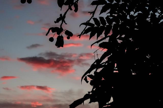 Garden Silhouette, bymadlily58