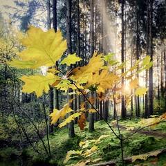 Instagram 20211024: Autumn, Isen (Isen, Germany)