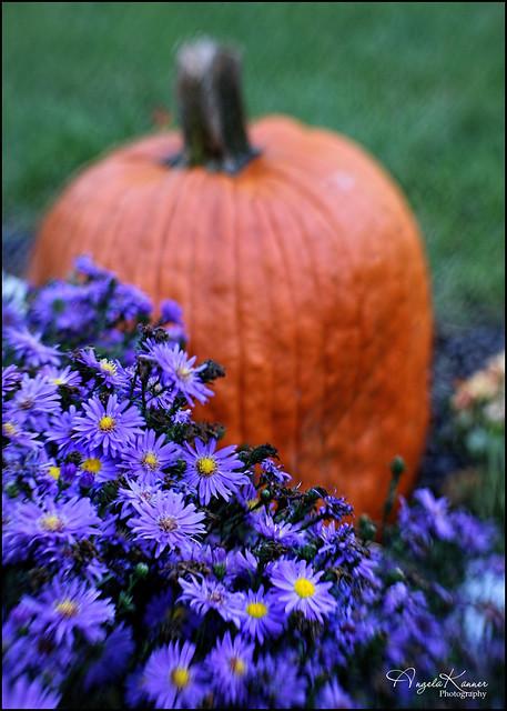 Asters & Pumpkin...
