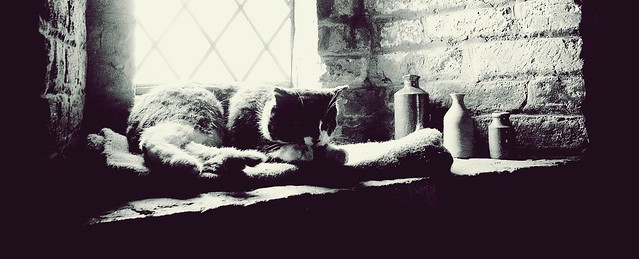 The Forever Sleep