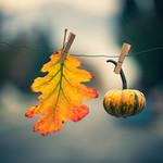 fall simplified