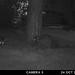 raccoons-20211024-106