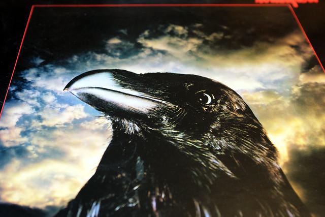 The Raven (297/365)