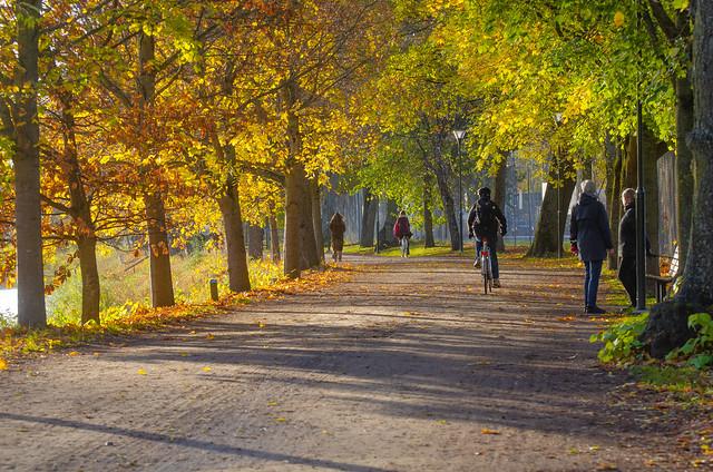Autumn shine...