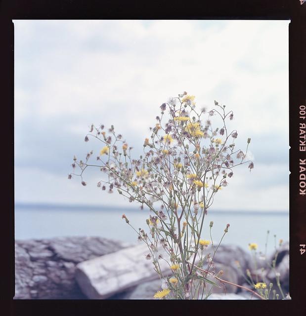 Autumn - Film Hasselblad