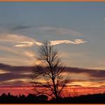 26. Detsember 2020 - 18:13 - Un arbre en hiver... (Entraigues sur la Sorgue - Vaucluse - 26 décembre 2020)
