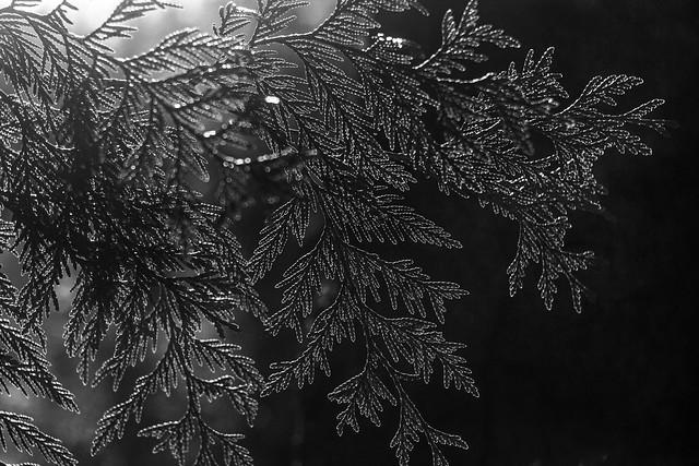 b-w leaves