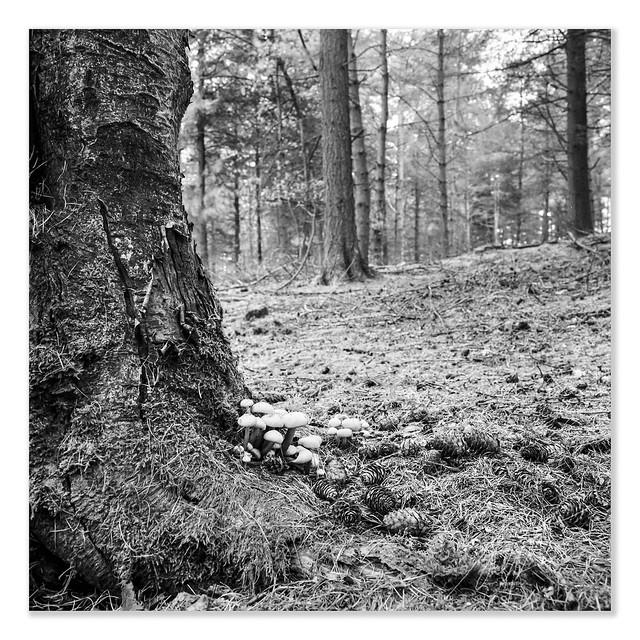 Birch Fungi - Ilford Delta 100