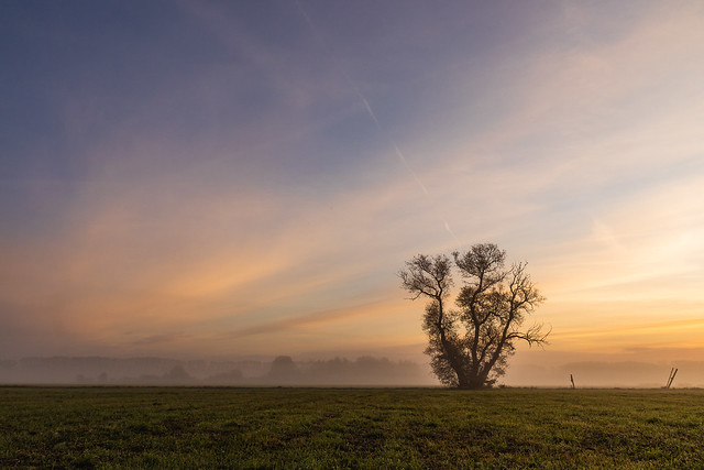 Die Weide an einem Morgen im Oktober