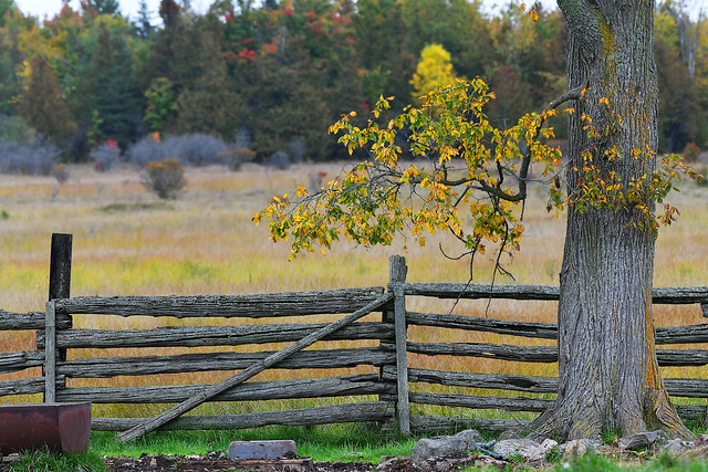 The Old Cedar Fence