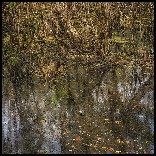 Lake Woodruff #29 2021; Floodplain Swamp #2