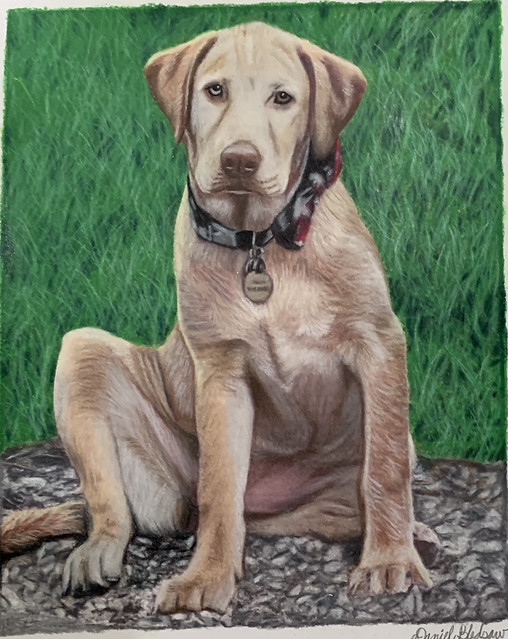 Patrice's Yellow Lab -Prismacolor pencil on Canson paper 🎨😊👨🎨