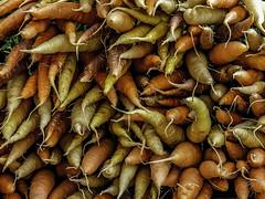 Carrots at the Kensington Farmer's Market
