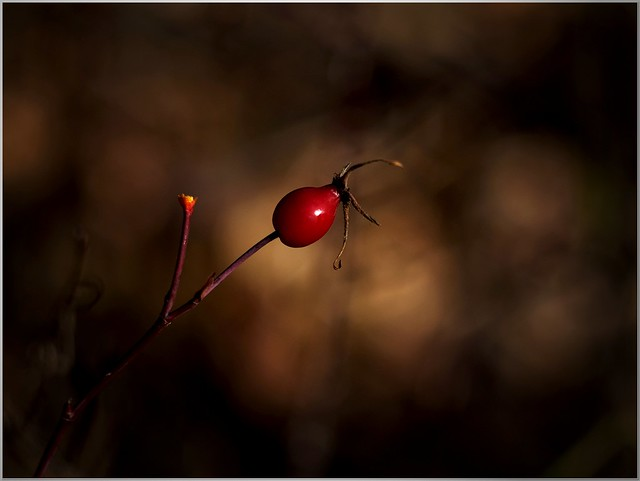 Solitary ...