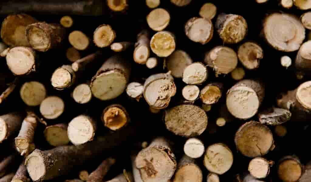 Un nouveau précédé créer un bois polyvalent et moulable