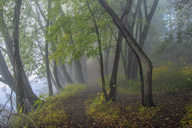 A little foggy alng the Grand River...