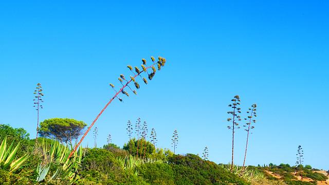 The Blossom & the green of the algarve coast