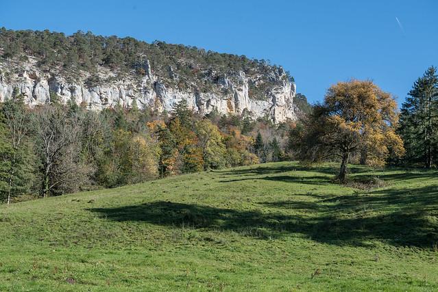 Forêt de la Cendre