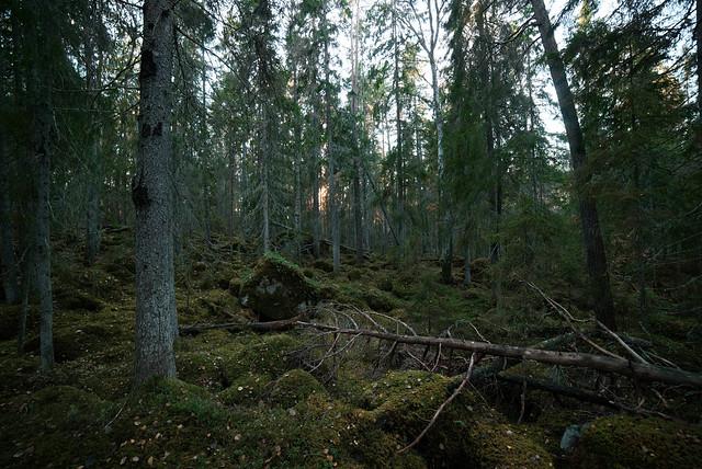 Svanhusskogen