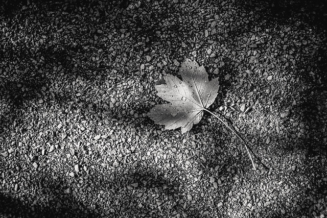 Take a lesson from the Autumn leaves, Best to release and go where the wind blows ...