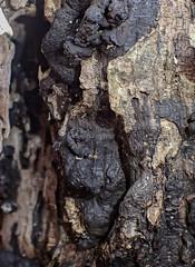 Diesen Pilz haben wir im verletzten Stamm einer alten Buche gefunden