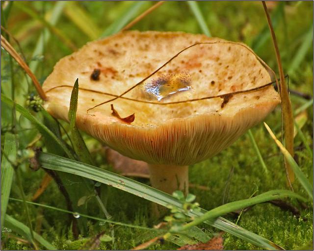 Mushroom in October