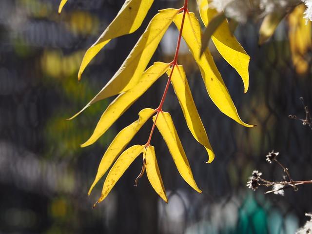 Enjoying sunny autumn