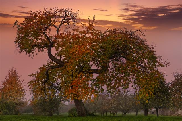 Autumn Swing • Der Herbsttanz