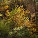 fall_color_bradshaws_1_20211025_116
