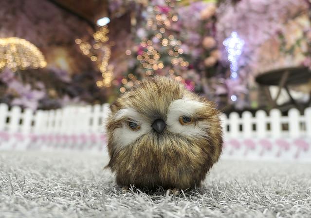 Owl You Doing?