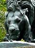 les reliefs du repas du lion du Jardin des Plantes
