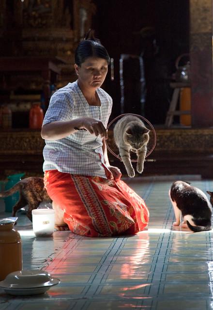 Playing with jumping cats , Nga Pai Chaung Monastery ,Myanmar