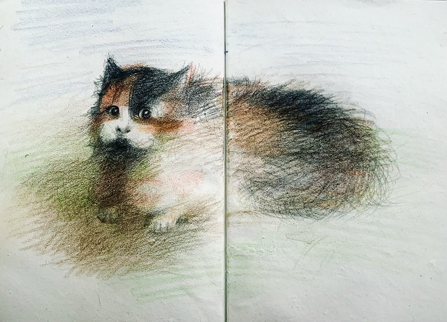 Cat doodles. Polychromos Pencil drawing by jmsw on recycled sketch book paper.