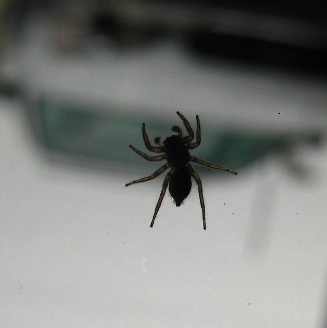 Spider on Glass_Explore_1281