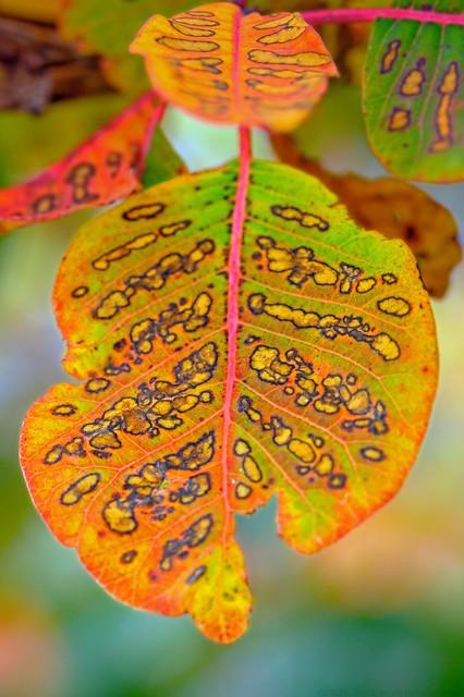 Autumneon