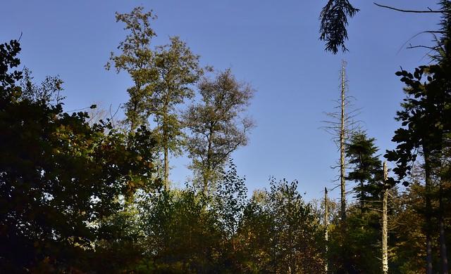 Im Lehmsieker Wald; Schwabstedt, Nordfriesland (29)