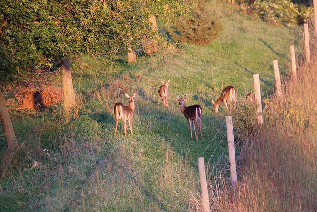 Deer family in the grass