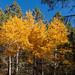 fall_color_bradshaws_1_20211025_118