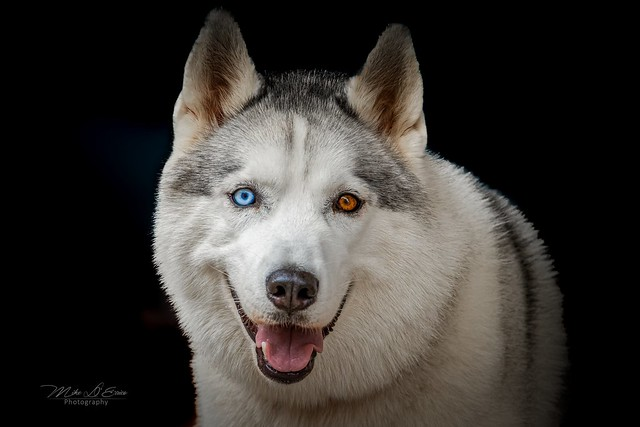 Blue Amber Eyes