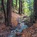 Palo Seco Creek after the rains, Joaquin Miller Park, Oakland, California