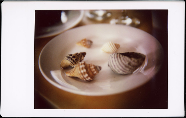 Plate of Shells