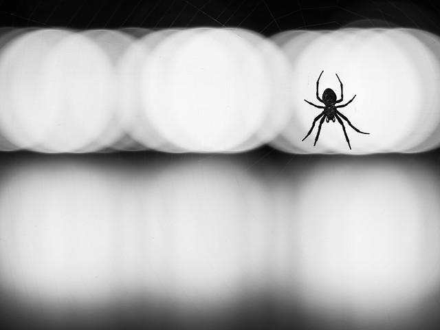 spider 02